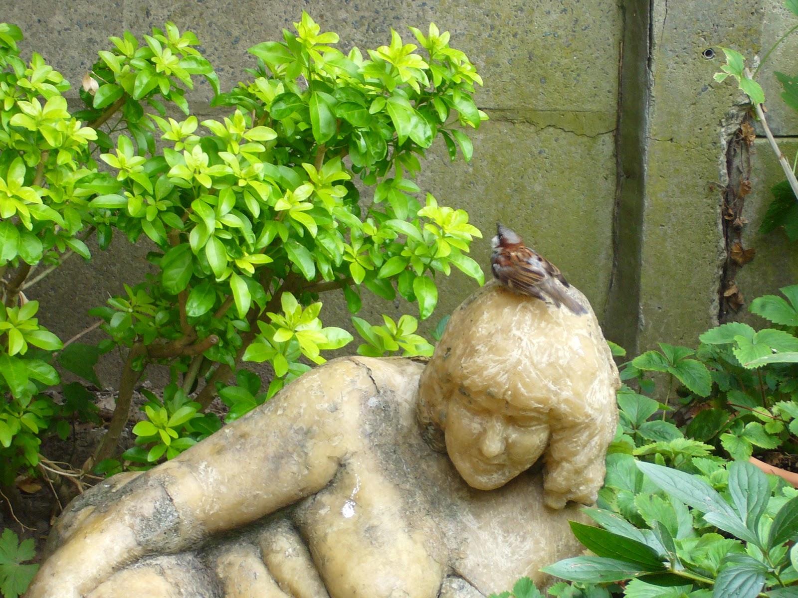 Jardin potager comestible partager un jardin de ville for Jardin 4 moineaux