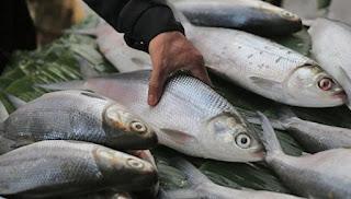 cara memasak ikan bandeng yang enak,resep masak ikan bandeng enak,resep olahan ikan bandeng,aneka resep ikan bandeng,aneka olahan ikan bandeng,resep bandeng bumbu kuning pedas,