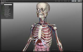 شرح Biodigital human لرؤية الانسان وهو هيكل عظمى واضافة اللحم له - See the skeleton HD