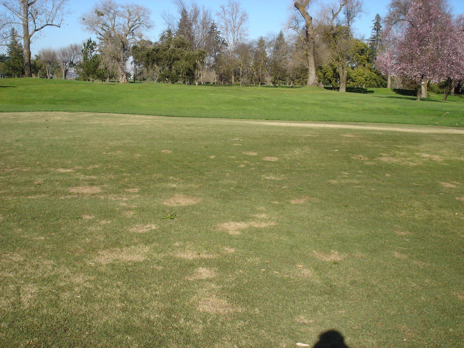 Stockton Golf Amp Cc Turf Page Disease Profile Spring Dead
