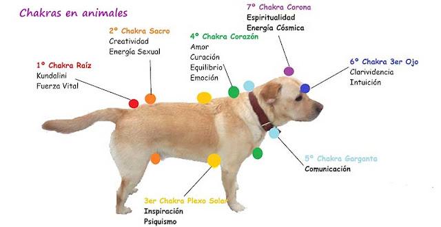 Resultado de imagen de terapia de energias en animales