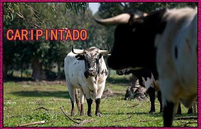 Diferentes razas de toros - Página 5 11429962_773755792741858_3926457372485815132_n