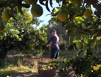 Logo Concorso AgriBio Jalari: vinci gratis 20 kg di agrumi bio (arance, limoni,pompelmi e clementine)