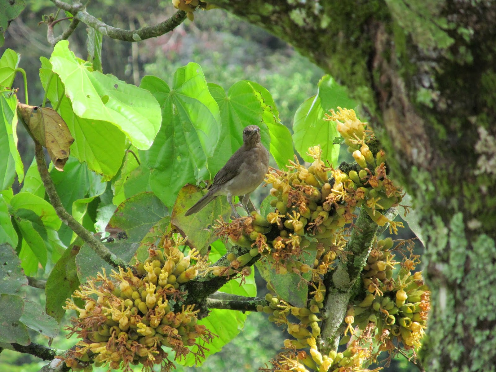 Fauna de Colombia  Wildlife Colombia Aves Pajaros