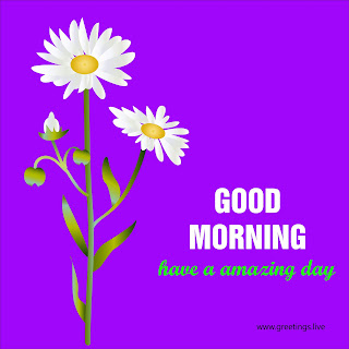 have a amazing day morning greetings