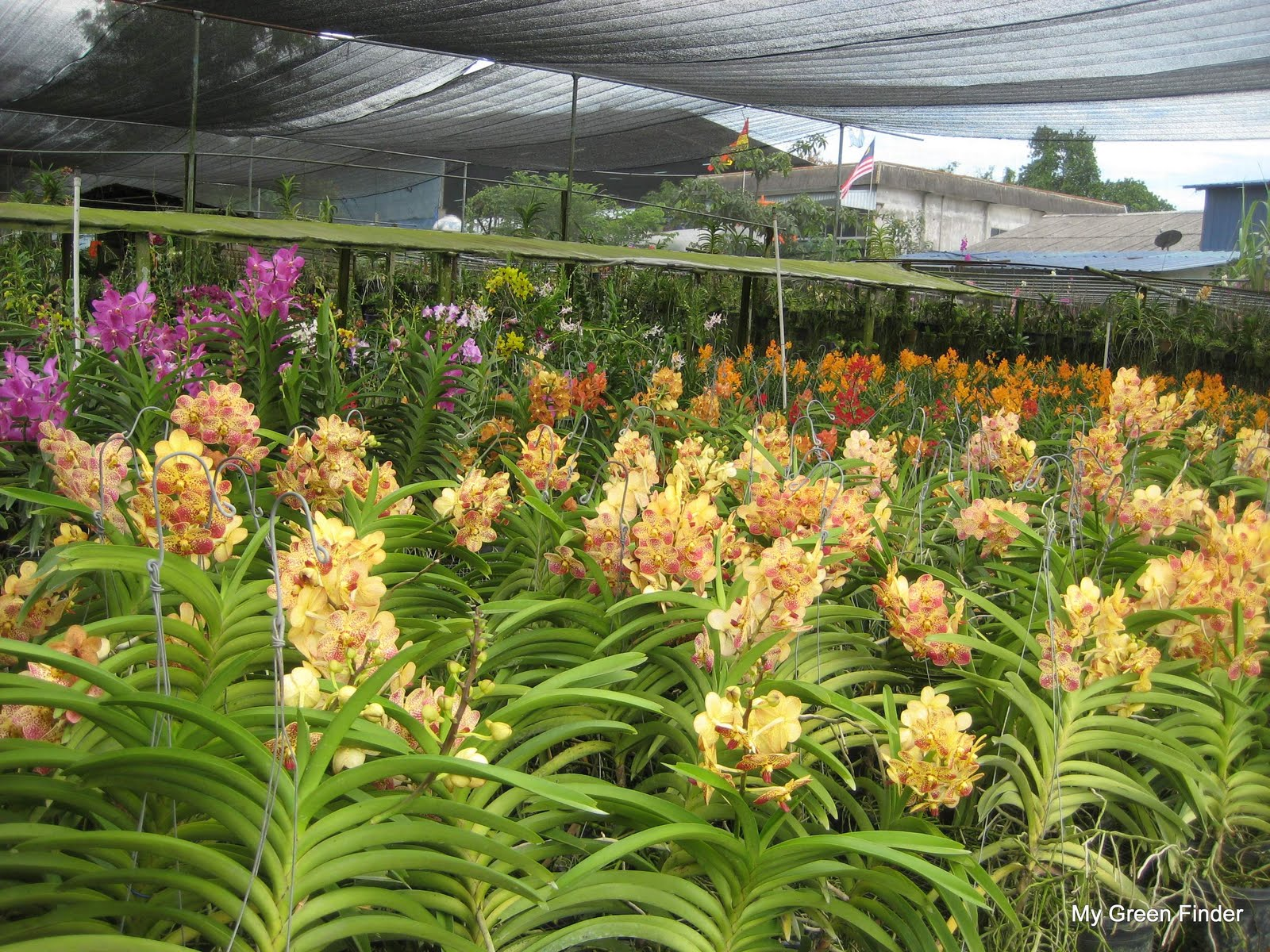 Layout Rating 3 75 Just Like Any Other Orchid Nursery This One Also Has All The Plants Placed Under A Netting Hence Orchids Are Protected
