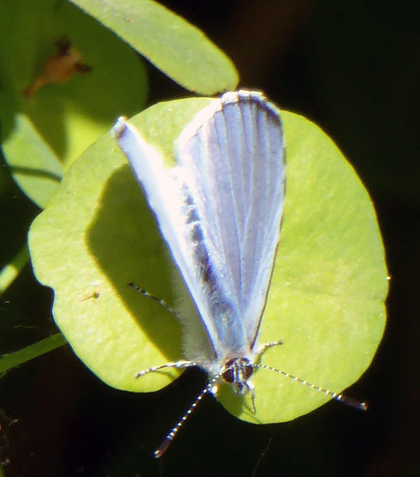robert frost butterfly