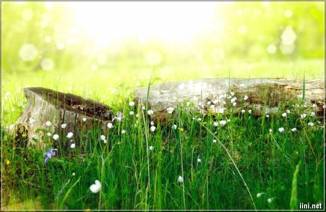 ảnh rừng hoa dại đẹp