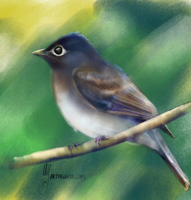 Brown-breasted flycatcher by Artmagenta