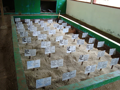 akcayatour, Pantai Sukamade, Travel Malang Banyuwangi, Travel Banyuwangi Malang, Wisata Banyuwangi