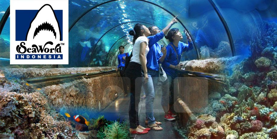 Berita Destinasi Wisata Paket Tour Seaworld Ancol Dari Bandung