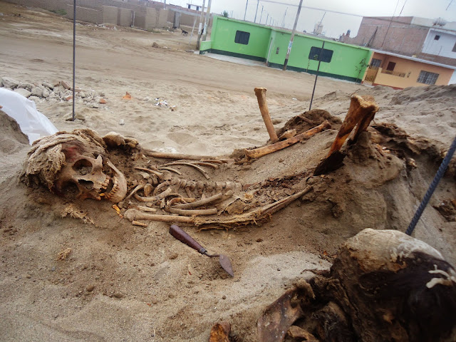 Archaeologists find ancient mass child sacrifice in Peru