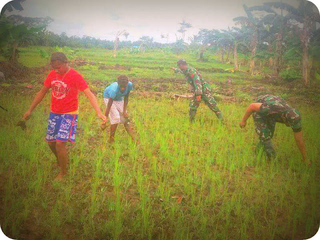 Anggota TNI Dampingi Warga Sagare Menanam Padi