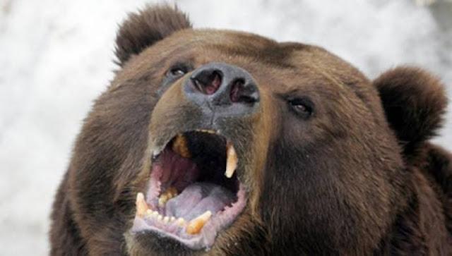 Πήγε στο αυτοκίνητό της και βρήκε μέσα μια αρκούδα - Η συνέχεια στο βίντεο...