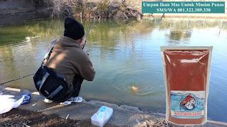 Umpan Ikan Mas Untuk Musim Panas