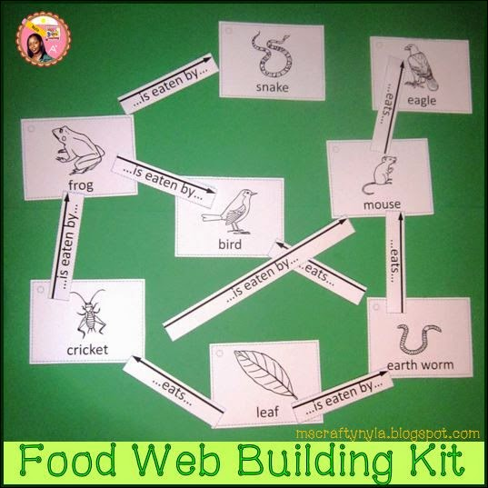 How-to-make-a-food-web
