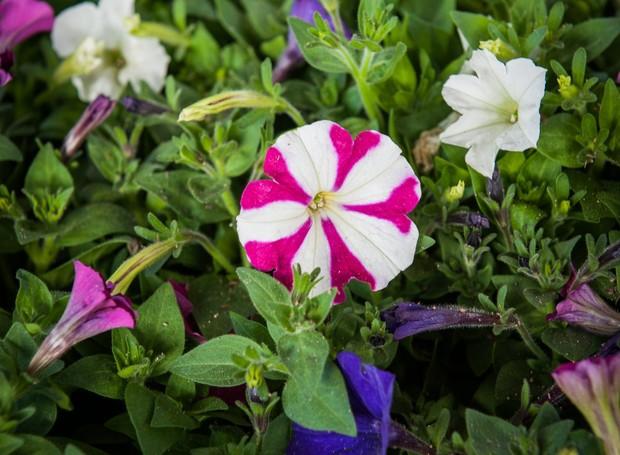 A planta ideal para o seu signo