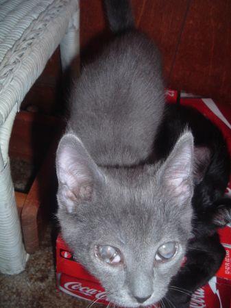 Craigslist Kittens Free   CINEMAS 93
