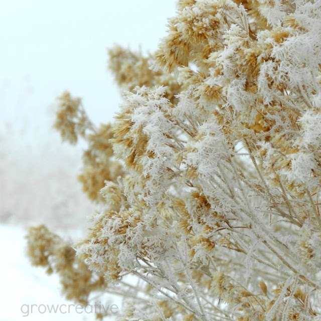 frosty sagebrush: growcreative