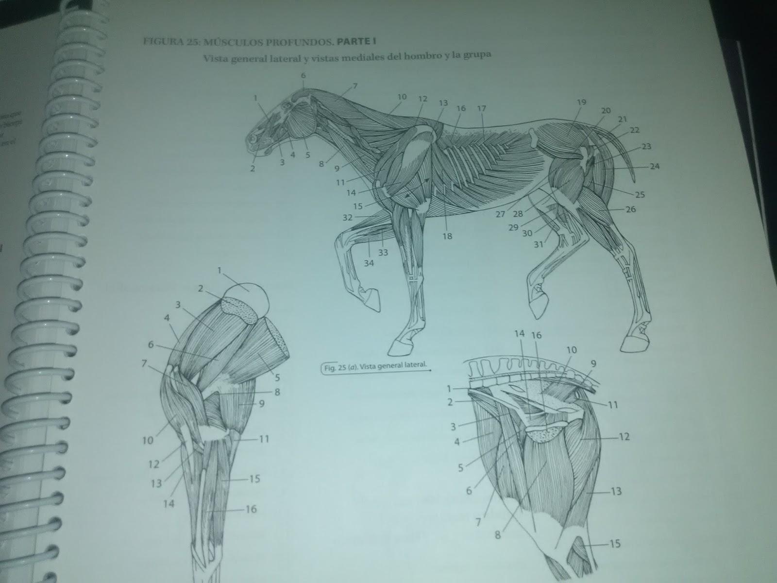 Único Tarjetas De Memoria Flash Canina Anatomía Ornamento - Anatomía ...