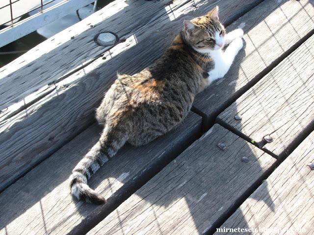 Ларнака Марина - кот греется на солнышке