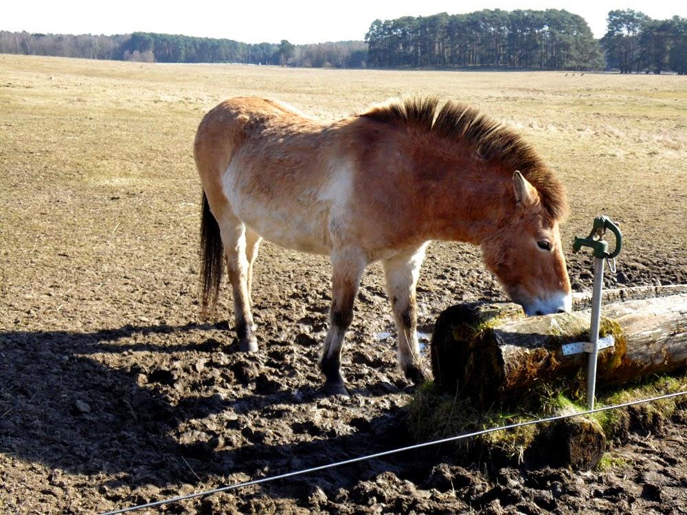 Rabid Horses In Germany! - 1000×750