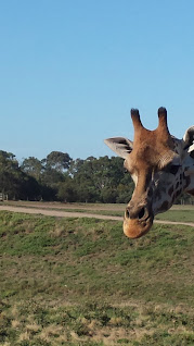 Safari Tour, Werribee Zoo