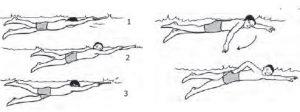 teknik koordinasi pernapasan dan gerakan lengan pada renang gaya bebas