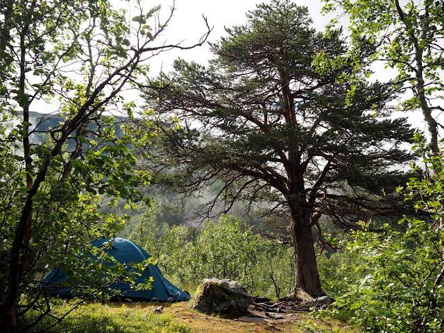 Stan, stanování, příroda, ohniště, stromy, Norsko, Jotunheimen