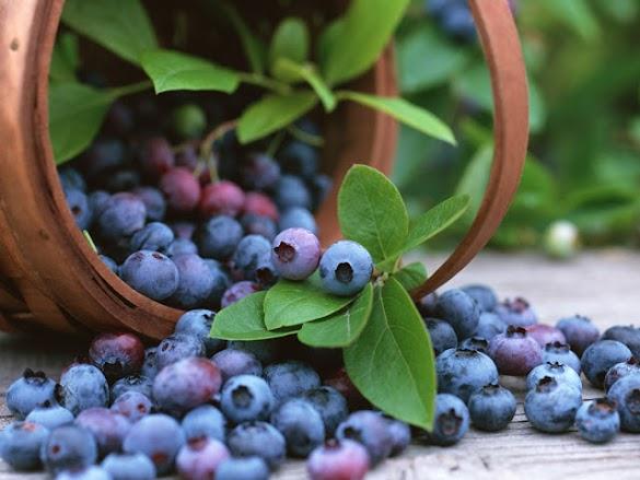 Hasil gambar untuk bluberry