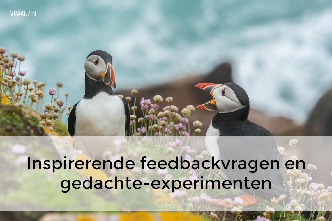 feedback vragen over functioneren