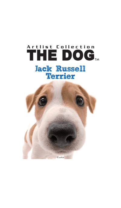 THE DOG Jack Russell Terrier