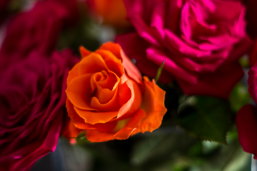 Blog + Fotografie by it's me! | fim.works | Geburtstagsblumen in Knallfarben | orangefarbene Rose