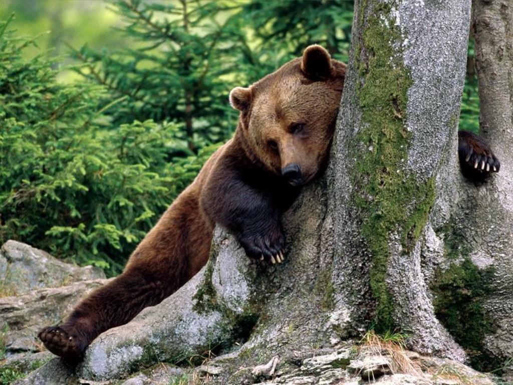 myzons berehat sebulan, myzons rest in peace, myzons ditamatkan, beruang berehat, beruang puasa