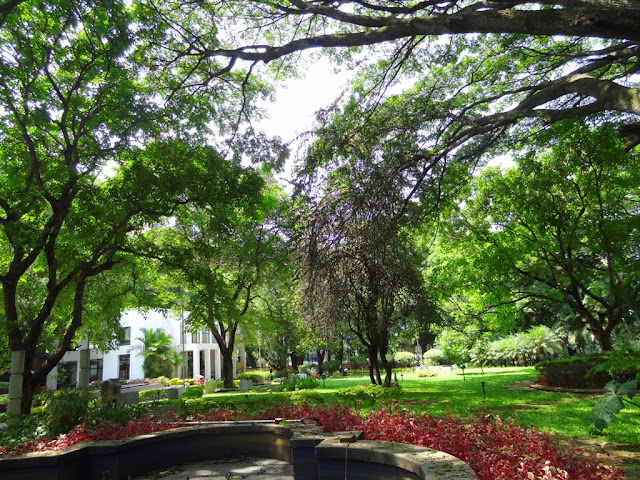 lush greenery at National gallery of modern arts - Bangalore