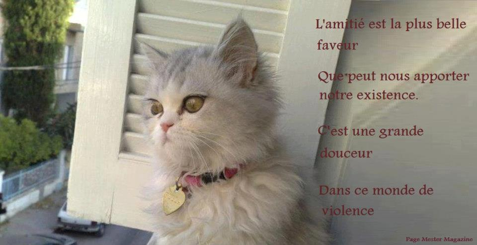 amitie chat Vitry-sur-Seine