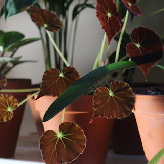 Blog o roślinach.