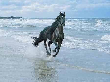 Лошадь на берегу дикого океана