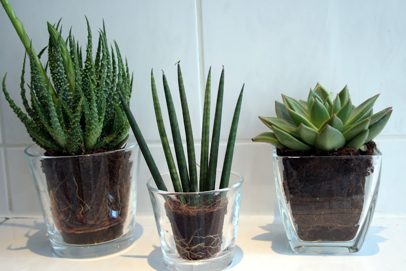 Rahelitasway Badezimmerpflanzen