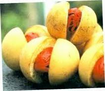 budidaya tanaman pala | jual tanaman pala unggul