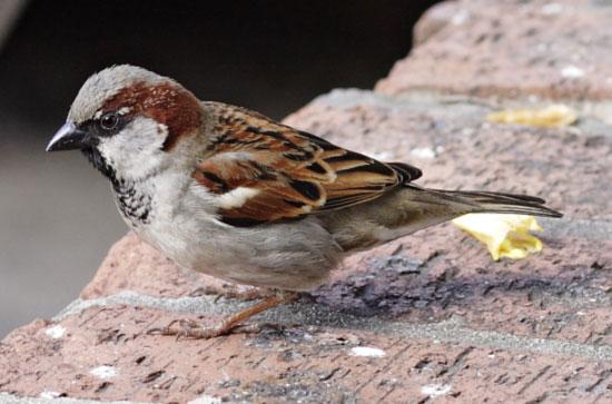 Only Sparrows will be found in books तब सिर्फ किताबों में मिला करेगी गौरैया