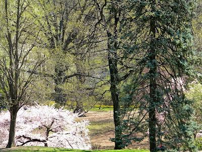 spring central park clip art