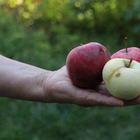 Jabłkowe smoothie z jarmużem