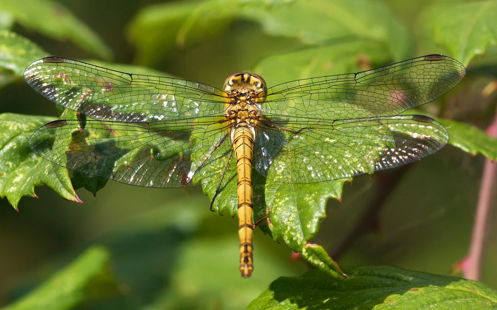 Cute Horse Wallpapers Dragonfly Wallpapers Pets Cute And Docile