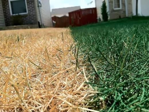 Has Artificial Grass Finally Come Of Age The Garden Of Eaden