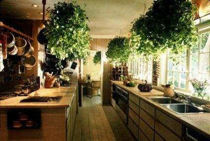 Tips For Decorating The Kitchen With Hanging Plants 8
