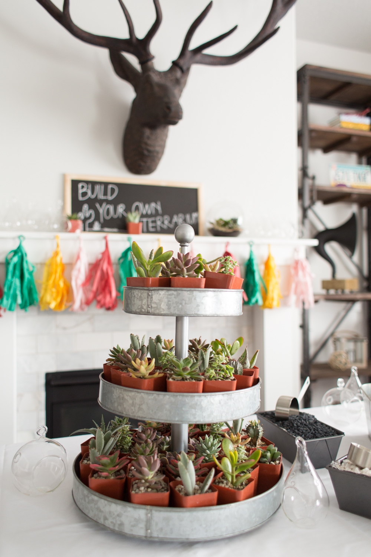 Build your own terrarium cactus party stations