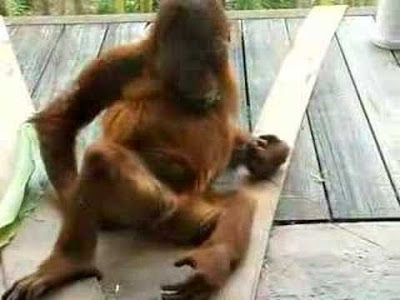monkey picking his bottom