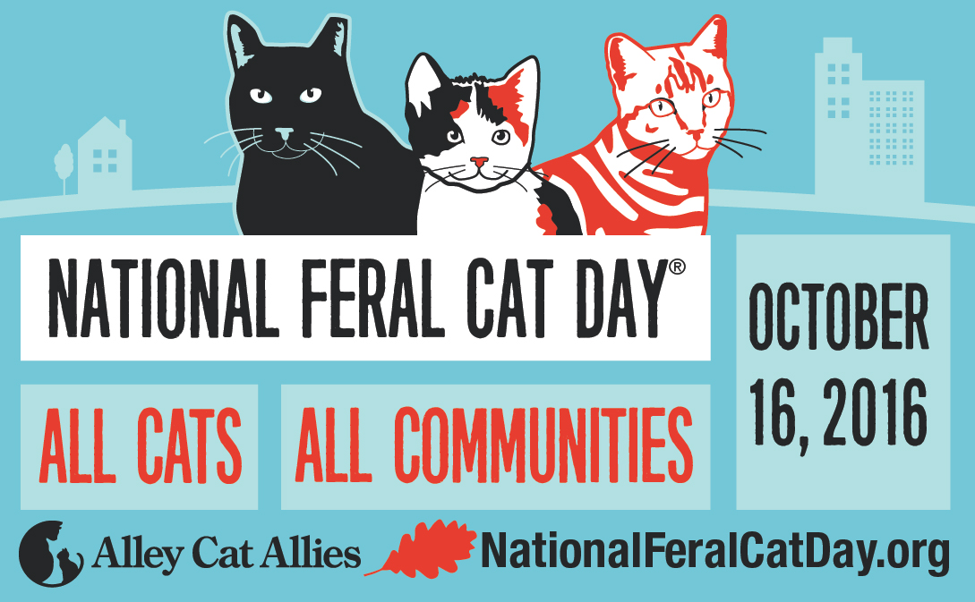National Feral Cat Day October 16, 2016