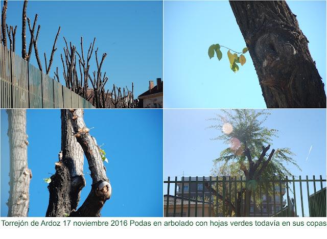 El ayuntamiento de Torrejón de Ardoz realiza podas antes del comienzo del invierno biológico